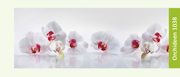 https://kuechen-rueckwand.com/media/configurator/orchideen1038-kuechenrueckwand-on.jpg