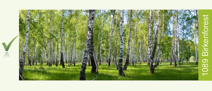 Birkenforest