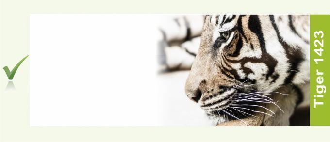 1423_Tiger